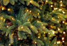 Bologna-albero-Natale