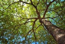 Bologna-alberi-giardini-margherita