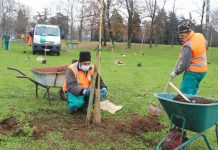Bologna piantumazione alberi