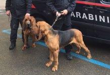 Mordano cani antidroga