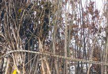 Trebbo di Reno piante parco