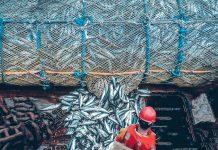 Emilia Romagna fermo pesca strascico
