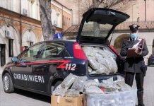 Bologna marijuana sequestrata