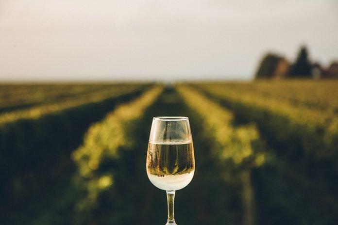 Vigneto con bicchiere vino