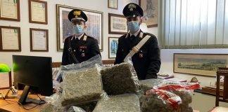 Bologna antidroga marijuana sequestrata