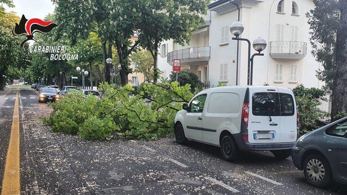 Imola albero caduto per vento