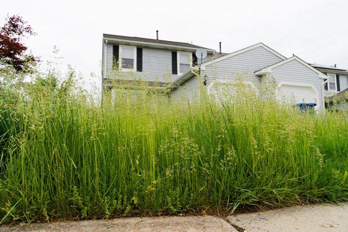 Imola taglio erba alta