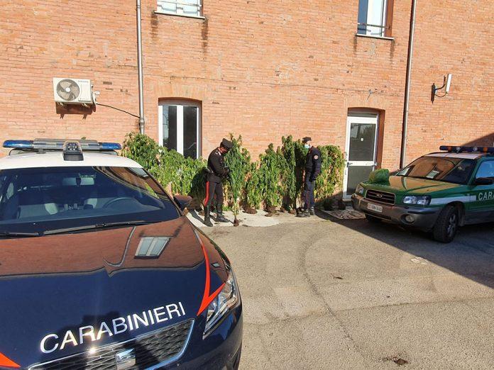 Carabinieri sequestro piante cannabis