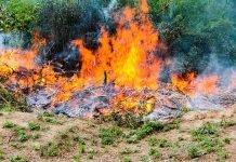 Sterpaglie che bruciano