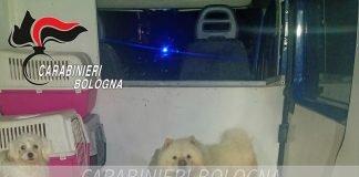 Pianoro cani salvati in furgone
