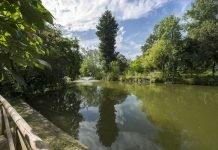 Sequoia sempreverde giardini Margherita Bologna